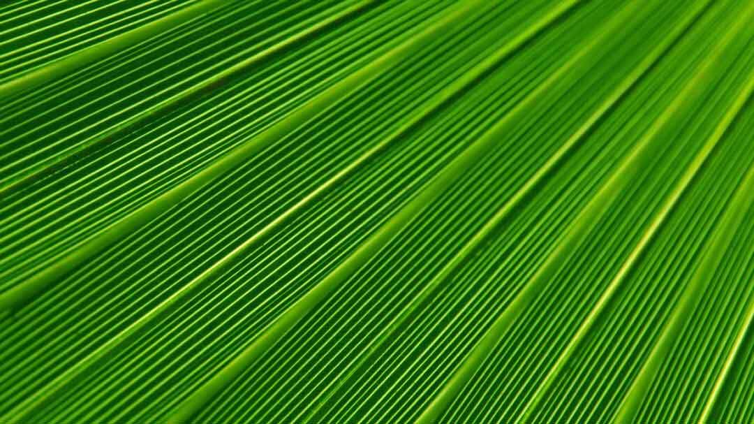 CTP platziert erfolgreich erste Anleihe als Green Bond